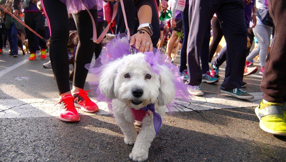 Correr con perros es bueno