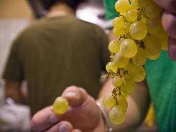 Uvas para Nochevieja