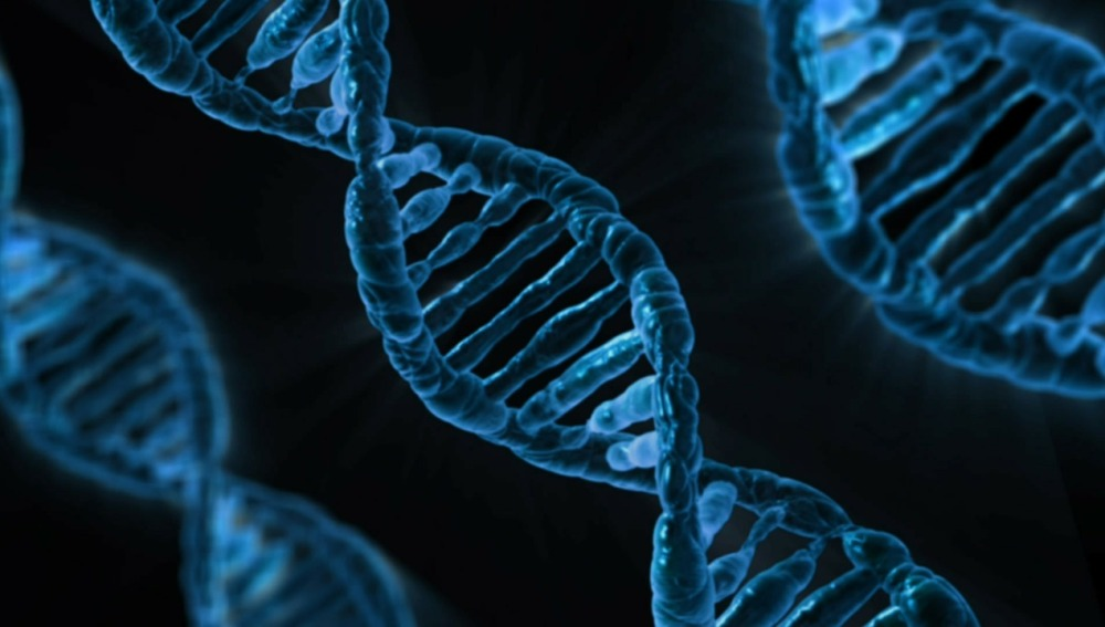 Recreación de los genes en el ADN