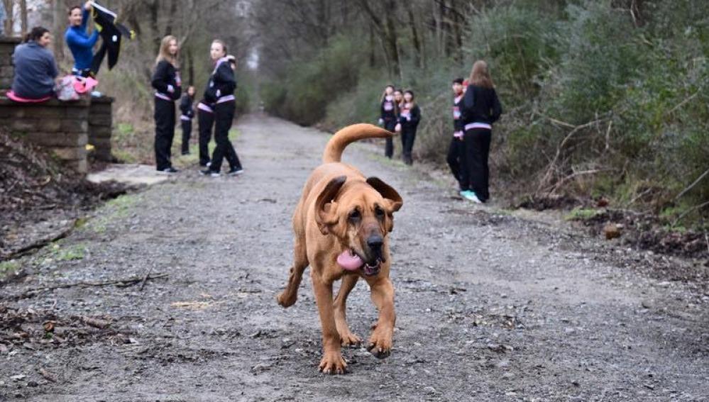 Ludivine, la perrita runner