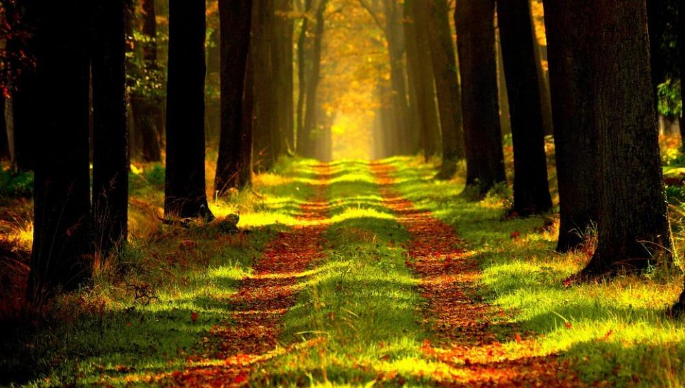 La naturaleza es buena para tu salud