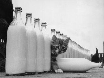 Cómo afecta la leche