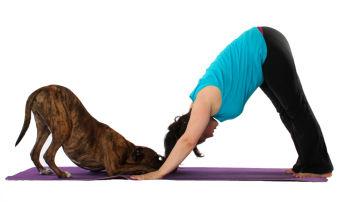 Ya no hay excusas para entrenar y disfrutar de tu perro a la vez.
